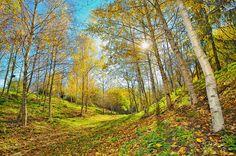 Autumn landscape  #Image #Photography #autumn #landscape   Kozzi Images   Royalty Free Stock Images for just $1