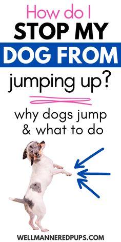 Puppy Training Tips, Best Dog Training, Dog Care Tips, Pet Care, Dog Potty, Dog Training Techniques, Up Dog, Schnauzer Puppy, Dog Facts