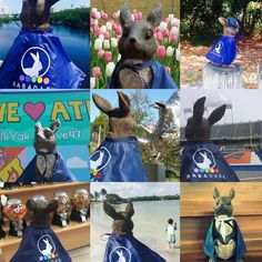 "Check out the #Rabadaba App ""Frith"" the #RABADABA mascot has been all over America! RABADABA users host Frith and we pay them $100. How easy is that?? Take a #cute rabbit around town and snap some pics and vids! Contests and promotions like this are going on all the time on the @rabadaba_app"