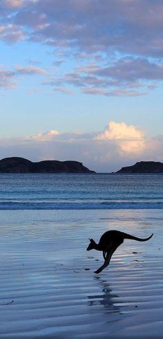 Lucky Bay, Esperance, Western Beautiful Cities in Australia West Australia, Australia Travel, Melbourne Australia, Australia Funny, Australia Photos, Queensland Australia, Wild Life, Australia Occidental, Places To Travel