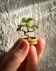 763 mentions J'aime, 122 commentaires - @mokimini sur Instagram: «Time again for another long tutorial post! 😄 I've made two bonsai trees now and they're very fun…» Dollhouse Miniature Tutorials, Dollhouse Miniatures, Bonsai Trees, Fun, Instagram, Plants, Flowers, Doll House Miniatures, Bonsai