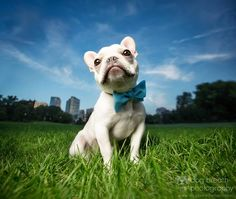 Dog Breath Photography | Her work makes me want to dive headfirst into pet photography! <3