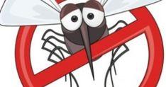 Τα κουνούπια γίνονται συχνά ο χειρότερος εφιάλτης μας και εκεί που καθόμαστε αναπαυτικά, αρχίζουμε και ξυνόμαστε σε όλο μας το σώμα. Παρακάτω θα σας δώσουμε μια απλή δοκιμασμένη λύση για να...