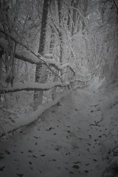 A snowy walk along the Appalachian Trail near Newfound Gap in the Great Smoky Mountains National Park.