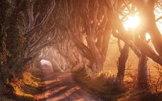 Sunny alley under he trees wallpaper
