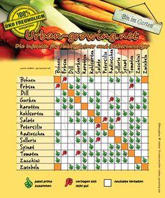 Der ultimative Pflanzplan für euer Gemüse! Viele Gemüsesorten vertragen bestimmte Nachbarschaften mit anderen Gemüsen nicht. So klappts bestimmt:...