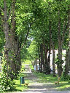 Karlskronabulevardi, Loviisa, Suomi, Finland Finland, Tourism, Plants, Night Photography, Nocturne, Cities, Scenery, Historia, Turismo
