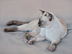Coloured pencil drawing of a Siamese cat.