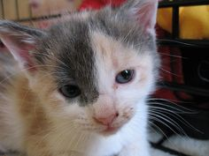 Kittens Jennifer and Pat are fostering     Become a fan of Brat the Cat and add your photos and cat tales.