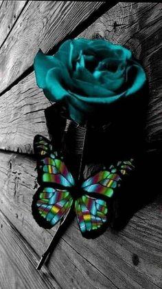 Blue Roses Wallpaper, Blue Butterfly Wallpaper, Flower Phone Wallpaper, Heart Wallpaper, Cellphone Wallpaper, Butterfly Pictures, Butterfly Flowers, Beautiful Butterflies, Beautiful Roses