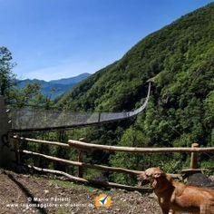 """Passeggiata ad anello per ammirare il """"ponte tibetano"""" da poco inaugurato: da Monte carasso a Sementina"""