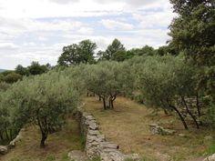 Olives, Olives and more Olives.