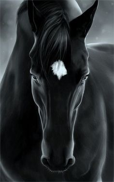 ~~black beauty~~