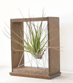 plantas de aire y madera vieja