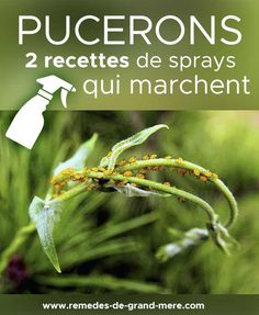 Sprays To Combat Aphids Planting Vegetables, Vegetable Garden, Planter Menthe, Diy Projects For Beginners, Garden Terrarium, Growing Seeds, Real Plants, Permaculture, New Hobbies