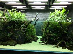 #nature aquarium #takashi amano #すみだ水族館 #sumida aquarium #aqua design amano…