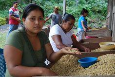 Trabajadoras-del-cafe-en-Finca-Magdalena