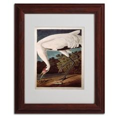Whooping Crane by John James Audubon Matted Framed Painting Print