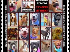 """7 /16 7/15 Please Share! SUPER URGENT tap picture  BEAUTIFUL LIVES OF DOGS TO SAVE 7/16TO BE DESTROYED STARTING 12NOON PLEASE SAVE US WE ONLY HAVE A FEW MINS / HOURS TO LIVE BEFORE WE GO TO DOGGY HEAVEN THANK YOU PLEASE REPIN AND SHARE THIS INFORMATION  TIME IS CRITICAL THANK YOU IRISH : . Please share! The shelter closes at 8pm. Go to the ACC website( ASAP to adopt a PUBLIC LIST dog (noted with a """"P"""" on their profile) and/or work with a rescue group if you can adopt/foster ANY of our dogs…"""