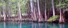 Manatee Springs, Chiefland, FL