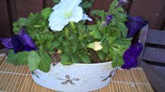 Dream Garden, Cabbage, Vegetables, Plants, Vegetable Recipes, Flora, Cabbages, Plant, Collard Greens