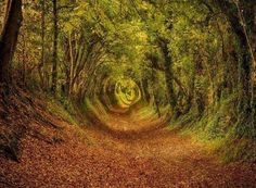 Ashdown Forest in West Sussex. Amazing Tree Tunnels You Should Definitely Take A Walk Through