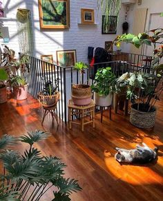 Downside Risk of Easy Houseplants for Indoor House Ideas If you opt to sell . The Downside Risk of Easy Houseplants for Indoor House Ideas If you opt to sell your house, a door which requires regular maintenance in addition to b… House Ideas, Dream Apartment, Apartment Goals, Apartment Interior, Hippie Apartment Decor, Hippie House Decor, Small Cozy Apartment, Girls Apartment, Vintage Apartment