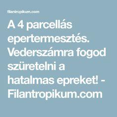 A 4 parcellás epertermesztés. Vederszámra fogod szüretelni a hatalmas epreket! - Filantropikum.com