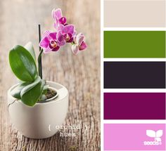 orchid hues - love it! (Design Seeds)