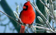 My fav bird ever!!