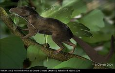 TDT3D - Henkelotherium by Gerard Ciavatti (Archeo)
