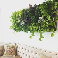Life Plant Decorations for Indoor in Vertical Hang - Jardin Vertical Fachada Wall Garden Indoor, Indoor Plant Wall, Indoor Plants, Jardin Vertical Diy, Vertical Garden Wall, Indoor Vertical Gardens, Plant Wall Decor, Green Wall Decor, Decoration Plante