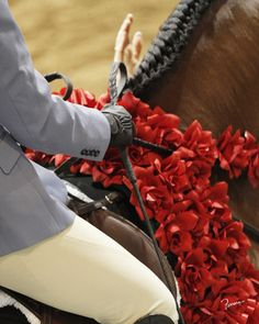 Beautiful. [Photo from 2011 Arabian/Half-Arabian U.S. Nationals]