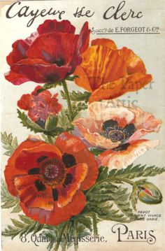 Red Poppies Antique French Vilmorin-Andrieux & Cie Paris 6x9 Seed Catalog Cover