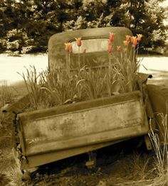 An old pick up truck with tulips, which my father was unable to repair. So my mother and I turned it into a little garden.