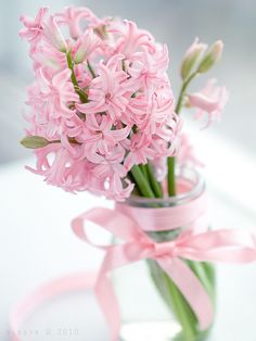 flowersgardenlove: Pink Hyacinths. Flowers Garden Love