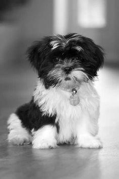 Scruffy cutie.
