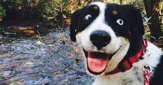 Cão com 'cara pura da felicidade' vira hit na web