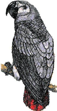 Advanced Embroidery Designs - Grey Parrot