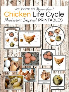 Montessori Chicken Life Cycle Printables - learn how to create awesome hands-on chick and chicken activities for kids. #montessori #preschoolactivities