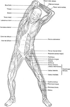 Anatomy Of Body Human Anatomy Hd Wallpaper Fullhdwpp Full Hd - eye anatomy coloring page