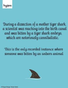 Shark Attack - Fact