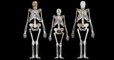 Genetic Taste Genes Helped Produce Modern Man - http://www.newhistorian.com/genetic-taste-genes-helped-produce-modern-man/2950/