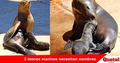Zoológico de Omaha quiere tu ayuda para nombrar a 2 leones marinos cachorros   Más detalles>> www.quetalomaha.com/?p=4573