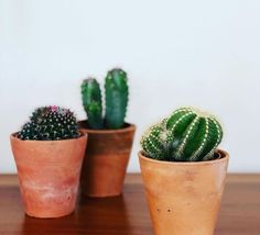 A guide to houseplants with Rooted in Scotland | Grandhome Leafy Plants, Tropical Plants, Garden Makeover, Peace Lily, Top Soil, Bathroom Plants, Desert Plants, Snake Plant, Plant Needs