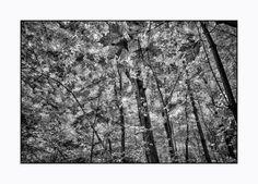 Fall in Black&White.