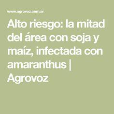 Alto riesgo: la mitad del área con soja y maíz, infectada con amaranthus | Agrovoz