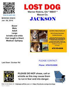 Lost Dog - Boxer - Warner Robins, GA, United States