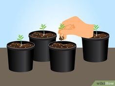 Image titled Grow Lavender from Seed Step 13 Planting Lavender Seeds, Growing Lavender Indoors, Lavender Garden, Garden Seeds, Growing Herbs, Growing Flowers, Planting Flowers, Growing Lavender From Seed, Lavender Crafts