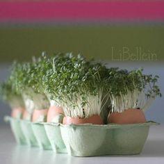 Upcycling mit  @LiBellein: Kresse in Eierschalen einpflanzen.